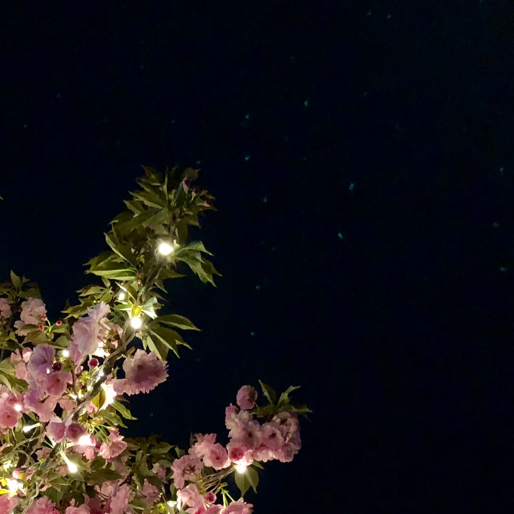 iPhone X镜头在强光下的光斑